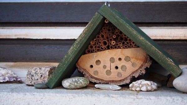 Urgence Biodiversité :  s'engager, quelle que soit son échelle
